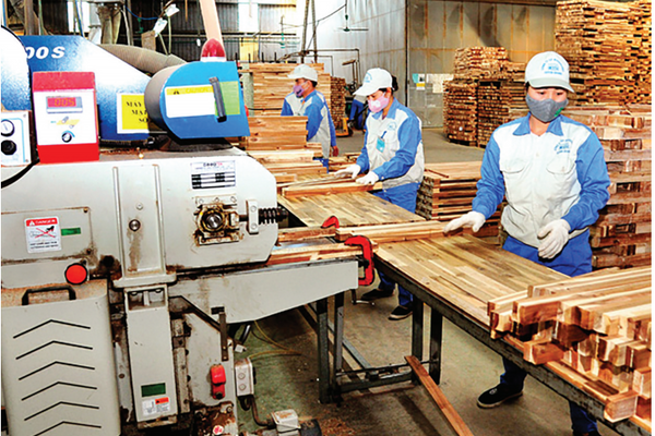 Tuyên Quang phấn đấu là điển hình về phát triển kinh tế lâm nghiệp