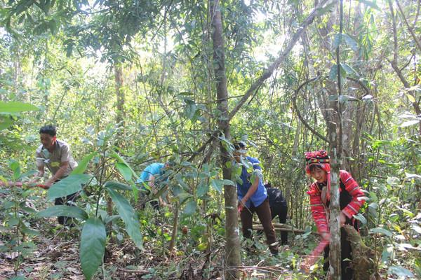 Nhìn lại công tác quản lý bảo vệ rừng tỉnh Điện Biên năm 2020