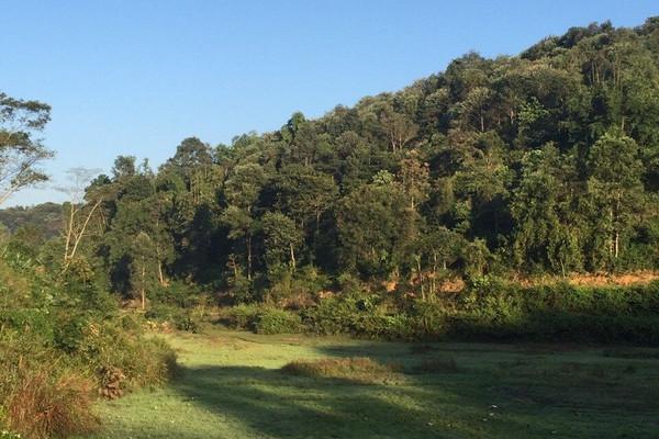 Điện Biên: Chi trả tiền dịch vụ môi trường rừng thông qua tài khoản ngân hàng