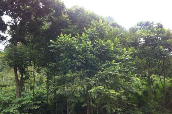 Hưởng ứng Ngày bảo vệ rừng thế giới - Chung tay phủ xanh Trái Đất: Dịch vụ môi trường và tiền tệ sinh thái từ rừng