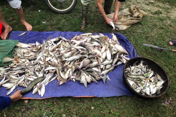 Thanh Hóa: Cá nuôi lồng bè trên sông Mã chết bất thường