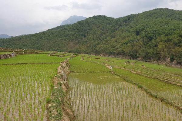 Thanh Hóa: Hỗ trợ gạo dự trữ Quốc gia cho công tác bảo vệ, phát triển rừng