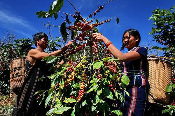 Đắk Lắk: Hỗ trợ nâng cao đời sống cho đồng bào dân tộc thiểu số