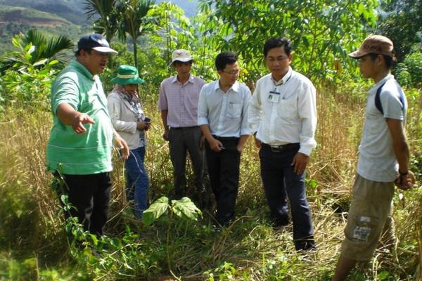 Quảng Ngãi: Rà soát các dự án, công trình liên quan chuyển đổi mục đích sử dụng rừng