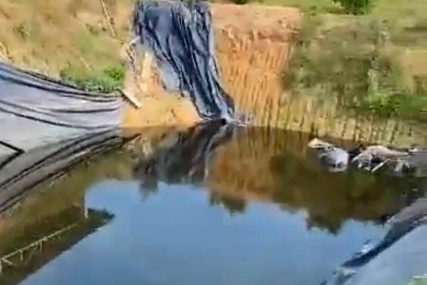Giếng nước nhuộm vàng, bốc mùi ở Quảng Ngãi: Do nước thải chăn nuôi