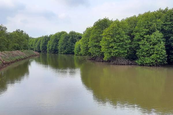Bến Tre: Bảo vệ rừng ngập mặn để giảm thiểu thiệt hại do thiên tai