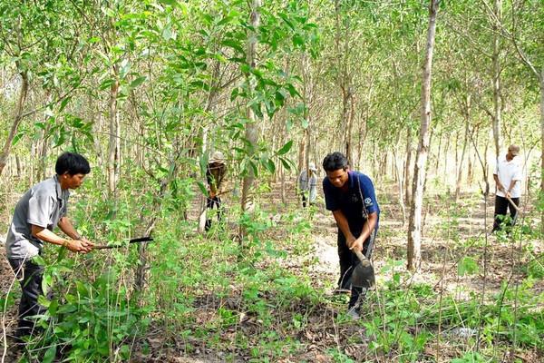 Phát triển lâm nghiệp bền vững: Giải pháp căn cơ để ứng phó BĐKH