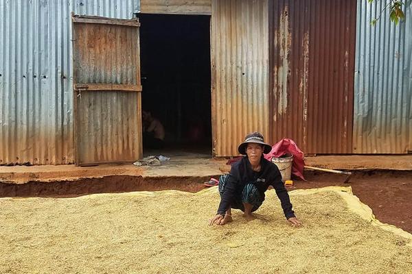 Gia Lai: Hỗ trợ đất ở, đất sản xuất cho người đồng bào dân tộc thiểu số
