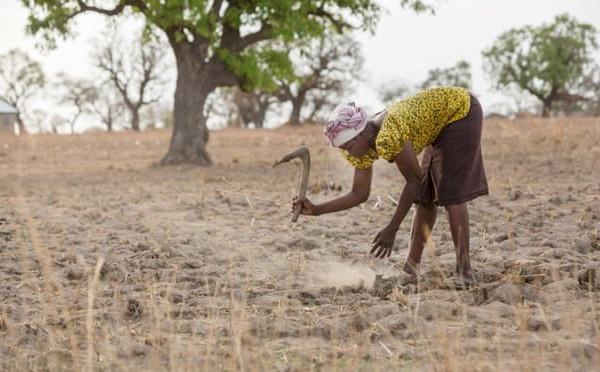 Hơn 30% sản lượng lương thực toàn cầu sẽ gặp rủi ro do khủng hoảng khí hậu