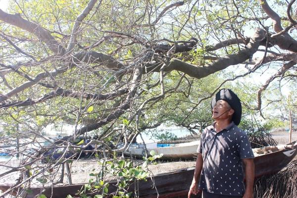 """""""Báu vật"""" trăm năm của làng biển Tam Giang (Quảng Nam)"""