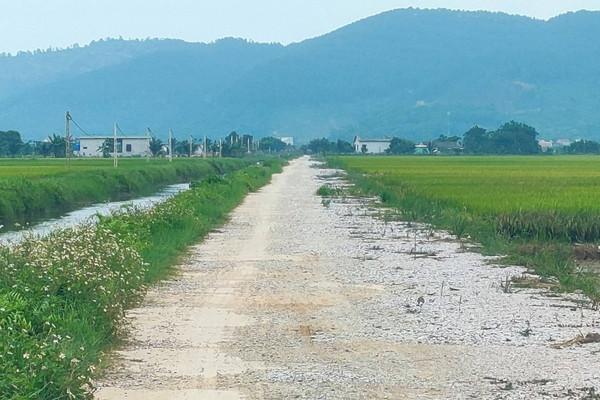 Hà Trung (Thanh Hóa): Chưa chuyển mục đích sử dụng đất, vẫn phê duyệt dự án