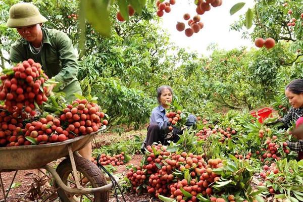 Chính phủ gỡ khó đầu ra cho nông sản tỉnh Bắc Giang