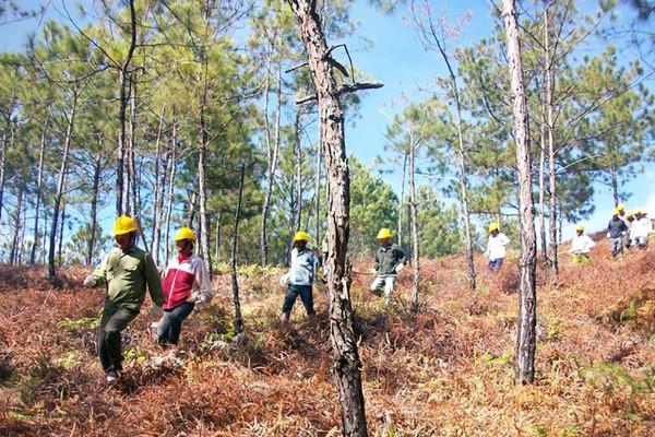 Chính sách chi trả DVMTR ở Cao Bằng: Góp phần bảo vệ môi trường, người dân được hưởng lợi