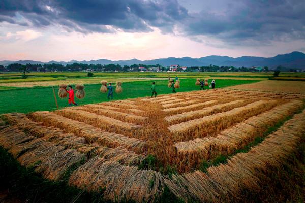 Khoảnh khắc mùa gặt