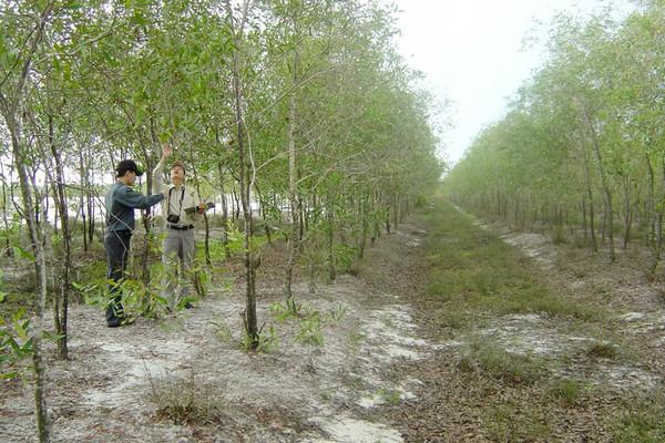 Để người trồng rừng làm giàu được từ rừng