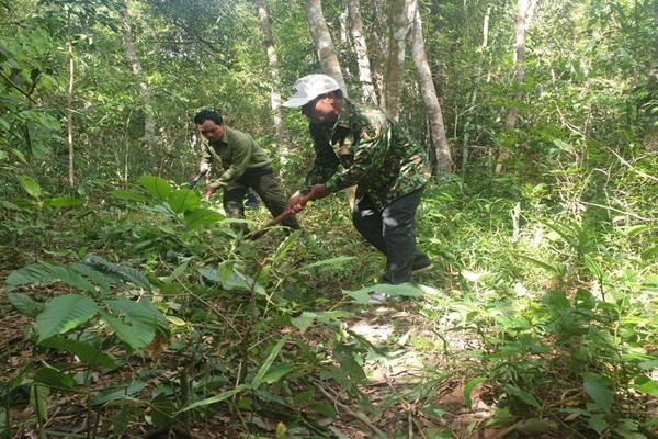 Đắk Nông: Công tác quản lý, bảo vệ rừng từng bước được ổn định