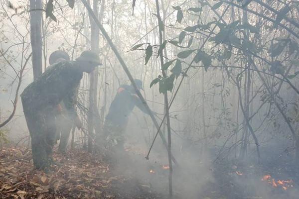 Đà Nẵng: Cảnh báo nguy cơ cháy rừng cấp cao nhất