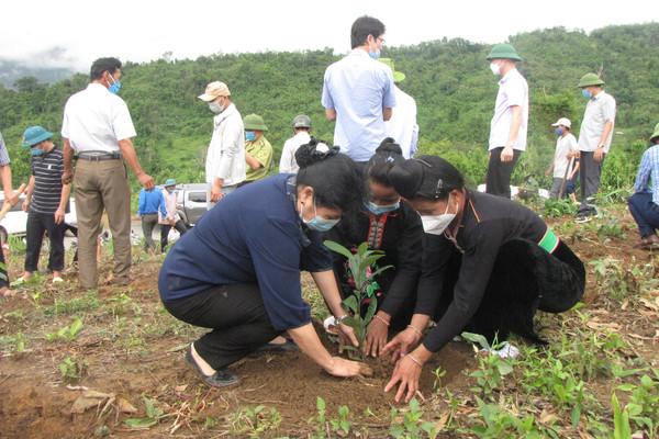Nậm Nhùn (Lai Châu): Phát động trồng rừng hưởng ứng chương trình trồng 1 tỷ cây xanh