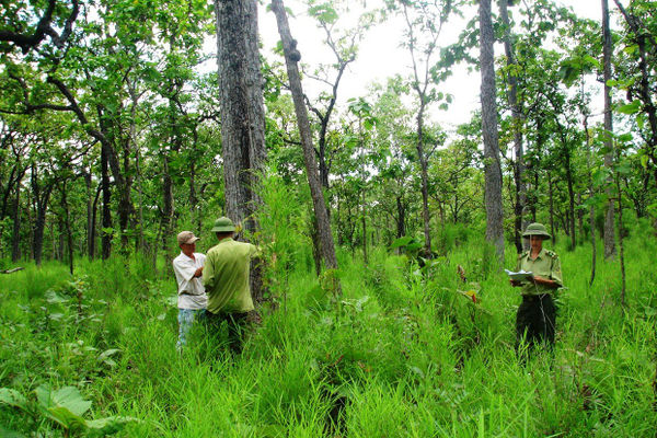 Bổ sung hơn 400 tỷ đồng để bảo vệ và phát triển rừng