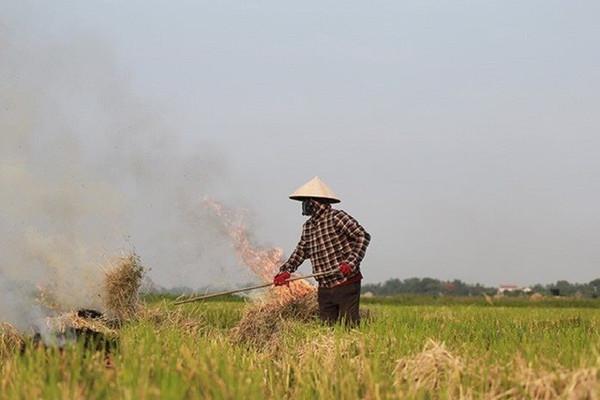 Bộ TN&MT yêu cầu xử lý nghiêm việc đốt rơm rạ không đúng quy định, gây ô nhiễm