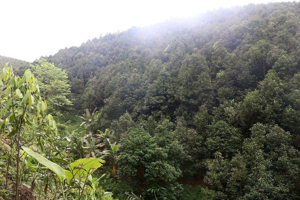 Lào Cai: Triển khai đề án trồng 1 tỷ cây xanh giai đoạn 2021-2025