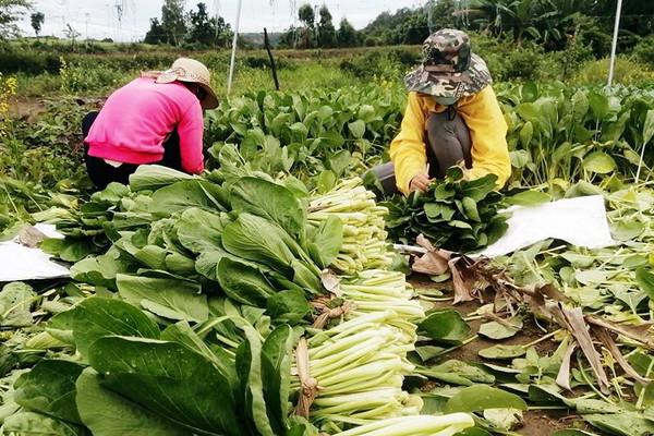 Gia Lai: Kinh tế tập thể thích nghi với khó khăn do dịch Covid-19