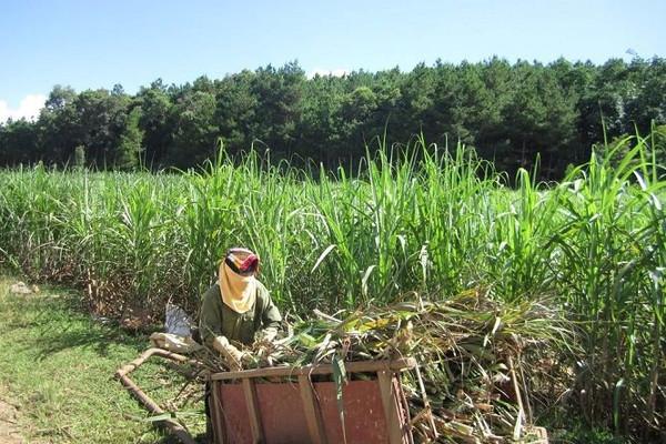 Áp dụng biện pháp chống bán phá giá đối với một số sản phẩm đường mía có xuất xứ từ Vương quốc Thái Lan