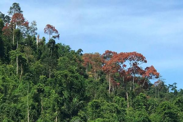 """Quảng Nam:  Ngăn chặn tình trạng khai thác """"lộc rừng"""" kiểu tận diệt"""