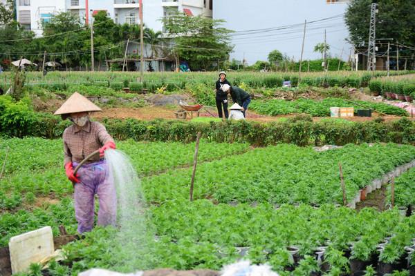 Căn cứ xác định hạn mức giao đất ở để tính tiền sử dụng đất