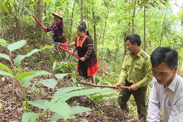 Mường Chà (Điện Biên): Đồng bào DTTS giữ rừng nhờ chính sách chi trả DVMTR