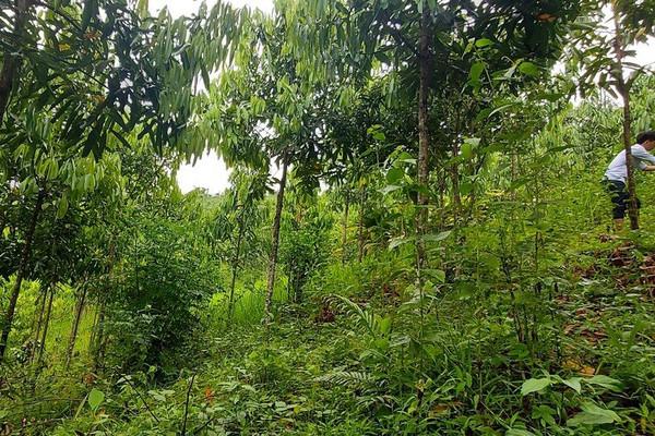 Trả lại màu xanh cho rừng