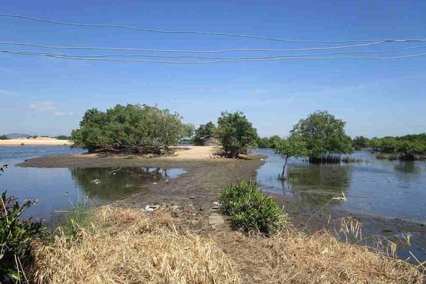 Bình Định: Đất bỏ hoang hóa 10 năm, dân khốn khổ kêu cứu