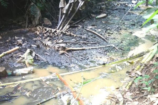 Gia Lai: Cơ sở chăn nuôi heo Linh Nhĩ gây ô nhiễm môi trường