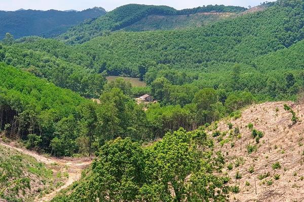 Thanh Hóa: Khẩn trương khảo sát, dự toán trồng rừng sản xuất năm 2021