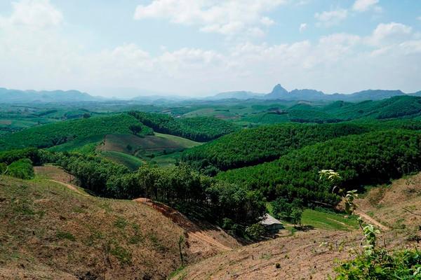Thanh Hóa: Hỗ trợ hơn 1,8 tỷ đồng thực hiện trồng rừng thay thế năm 2021