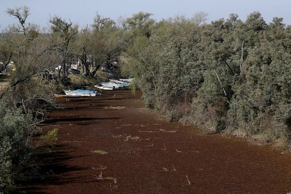 Mực nước sông Parana ở mức thấp nhất 77 năm, Argentina kêu gọi tiết kiệm nước