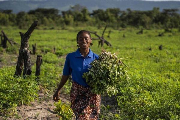 FAO hối thúc G20 đầu tư cho một hành tinh xanh tạo thực phẩm lành mạnh