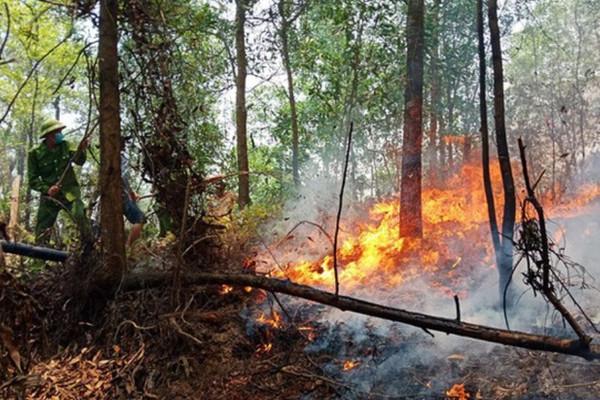 Hà Tĩnh: Phát hiện người đàn ông bị chết cháy tại rừng keo
