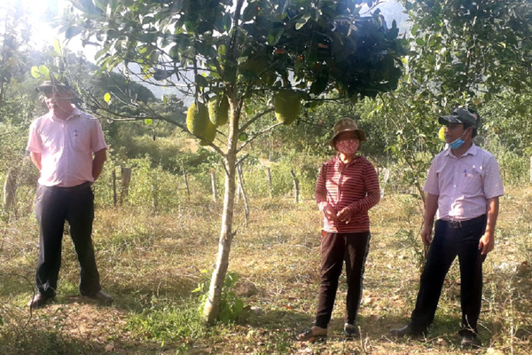 Nam Giang (Quảng Nam): Khai thác hiệu quả tài nguyên đất, thoát nghèo bền vững