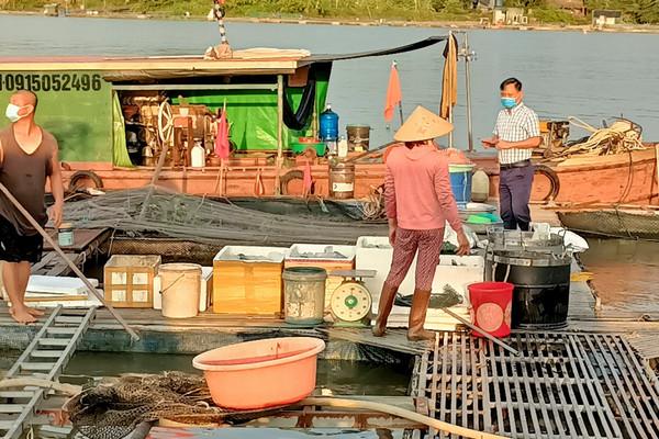 TP Hải Dương: Trạm bơm tiêu úng xả nước, hơn 3 tấn cá lăng của  2 hộ nuôi cá lồng bị chết
