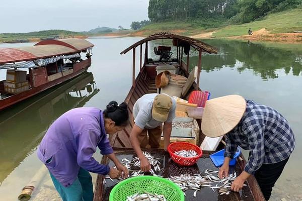 Khai thác thủy sản bền vững trên hồ Thác Bà