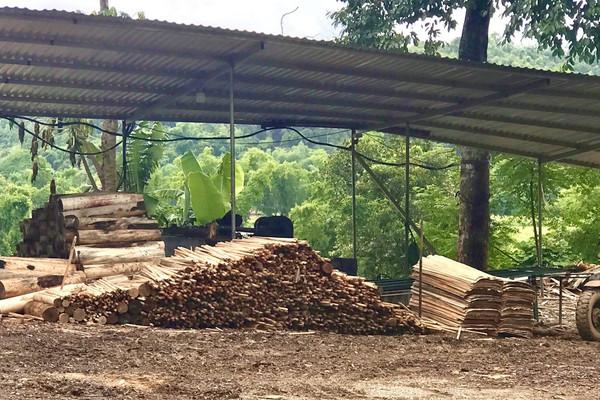 """Thiếu hồ sơ pháp lý, xưởng gỗ bóc vẫn """"ngang nhiên"""" hoạt động: Chính quyền địa phương vào cuộc"""