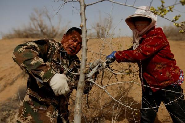 Trung Quốc sẽ trồng 36.000 km2 rừng để chống biến đổi khí hậu