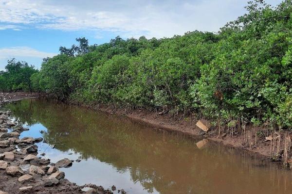 Nâng cao nhận thức của người dân về trồng và bảo vệ rừng ngập mặn