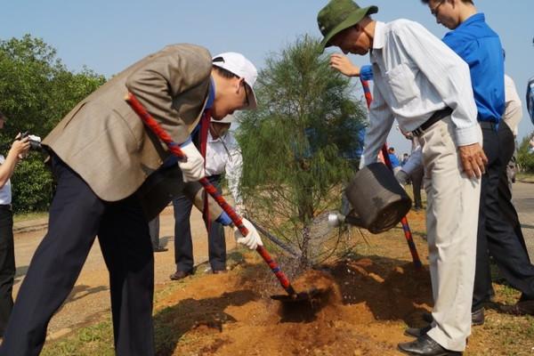 Quảng Ngãi: Sẽ trồng mới khoảng 251.000 cây xanh ở các khu vực đô thị