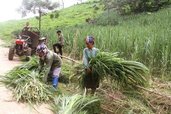 Ưu tiên giao đất ở, đất sản xuất cho đồng bào dân tộc thiểu số và miền núi