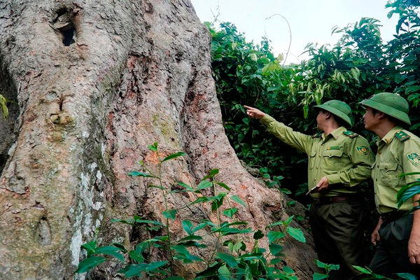 Thanh Hóa: Phê duyệt phương án phát triển Khu bảo tồn thiên nhiên Pù Luông