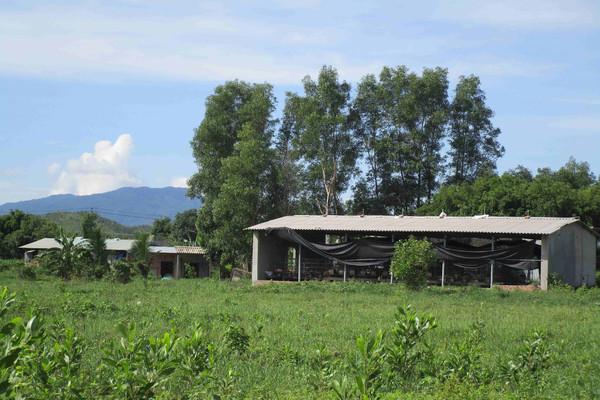 Bình Định: Một hộ nuôi heo khiến hơn 60 hộ nín thở vì mùi hôi thối