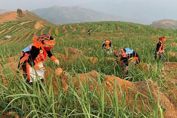 Áp dụng khoa học giúp bảo vệ môi trường vùng cao