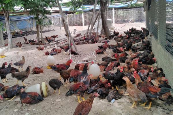 Không xử lý chất thải chăn nuôi bị xử phạt như thế nào?